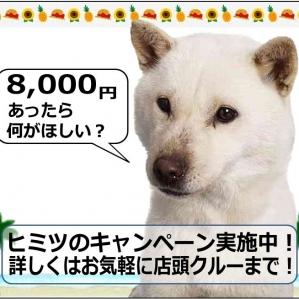 ¥8,000 찬스!비밀의 캠페인