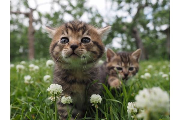 World cat walk khotla family and world good ko of Mitsuaki Iwago for theater